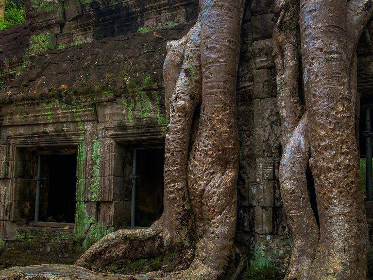 Baumwurzeln über den Tempeln von Ta Prohm