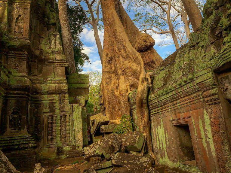 Ein Baum wächst über einen Tempel