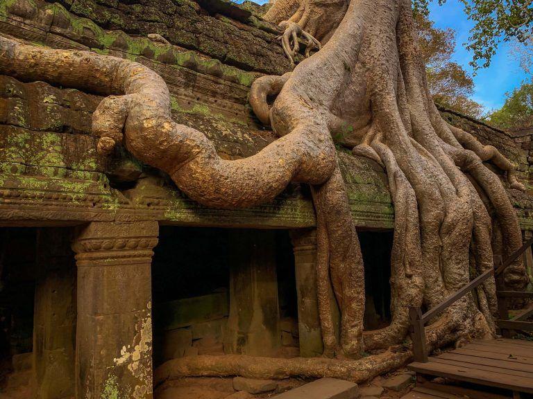 Baumwurzeln über den Tempeln von Tah Prohm
