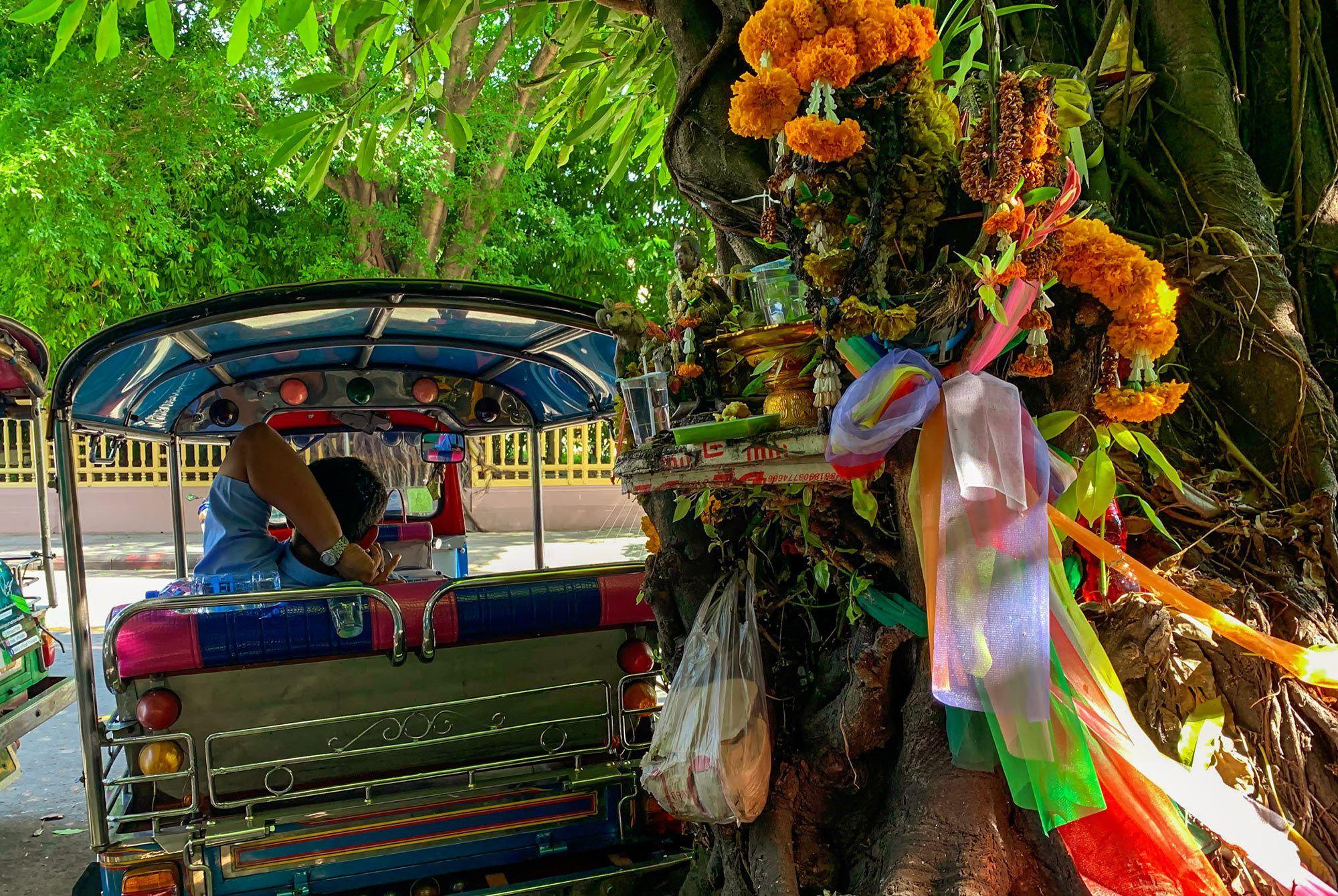 Heiliger Banyan Baum