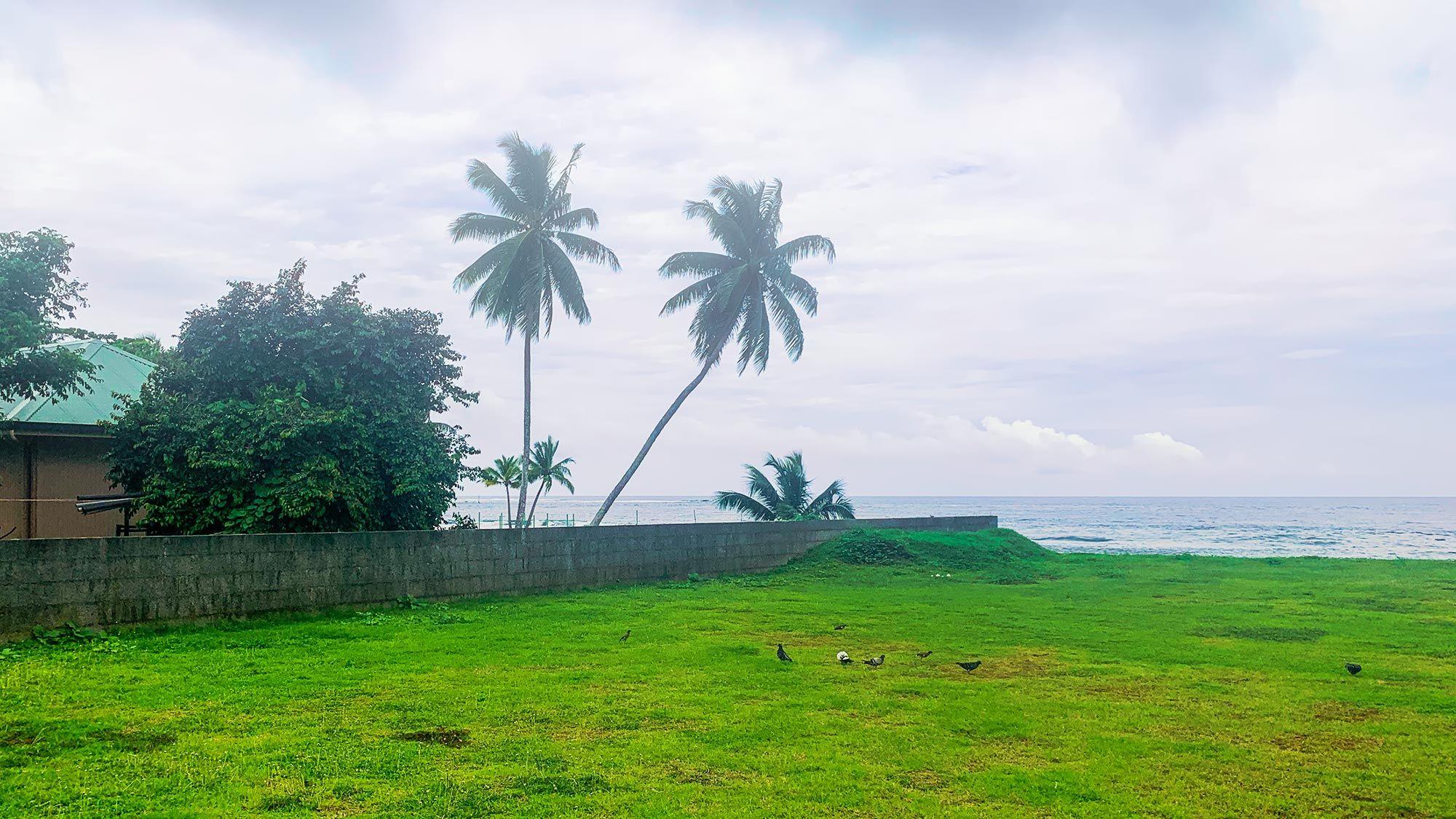 Tahiti Palmtrees