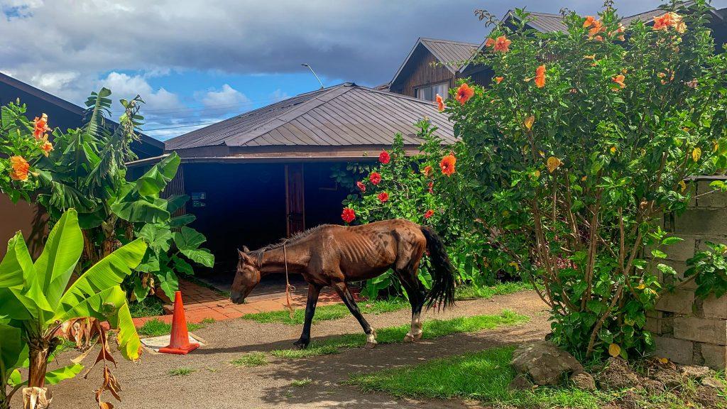 ein pferd im garten